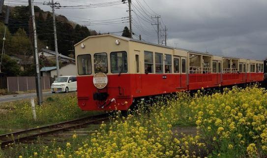トロッコ列車と菜の花