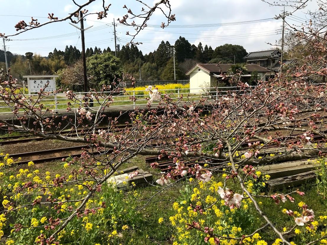里美駅桜と菜の花